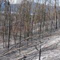 Post burn 2009